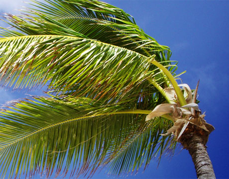 Palm-Trees-Sway-Wind-Turbine-Design_hero
