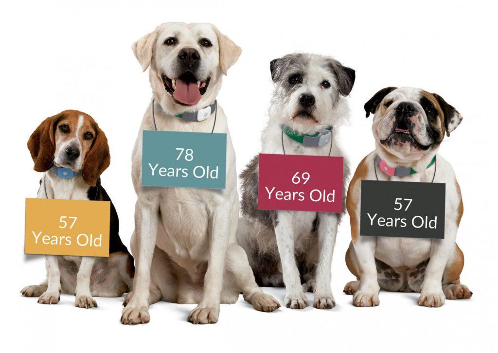 senior-dogs-1024x726